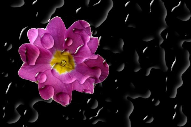 Flower, Blossom, Bloom, Primrose, Cowslip