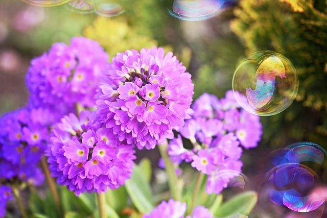 Primrose, Drumstick, Pink, Spring Flowers, Garden