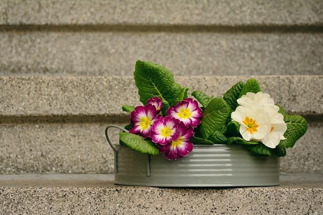 Primroses, Spring Flowers, Decoration, Primrose