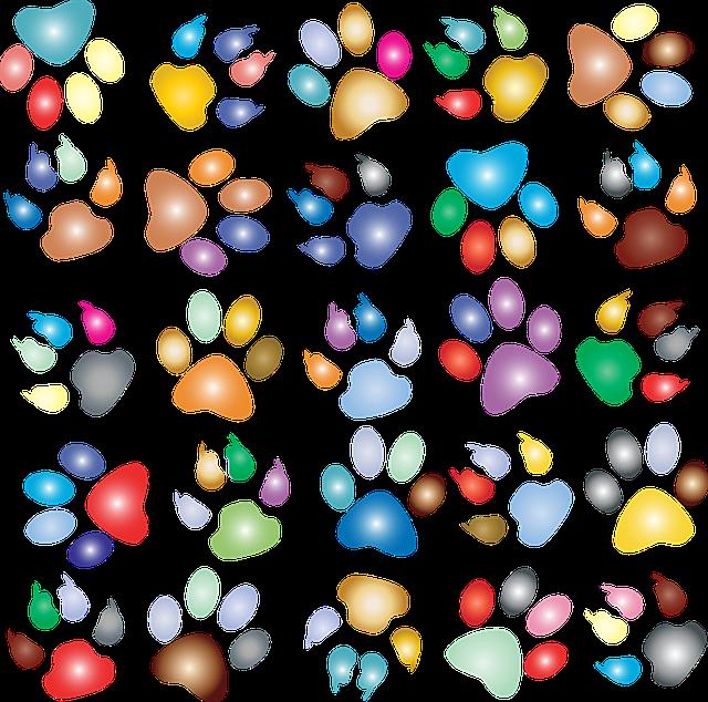 Colorful, Prismatic, Rainbow, Animal, Paw Prints, Dog
