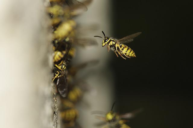 The Hive, Compound, Wing, Probe, Yellow, Striped