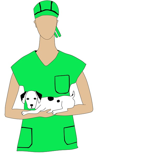 Vet, Pet, Profession, Doctor, Animals, Dog