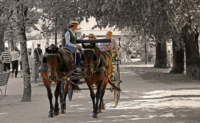 Promenade, Horses, Trees, Lake Promenade, Coach