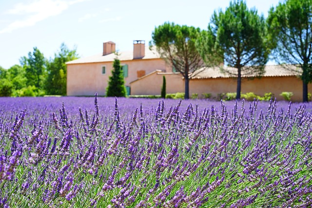 Lavender, Estate, Property, Lavender Field