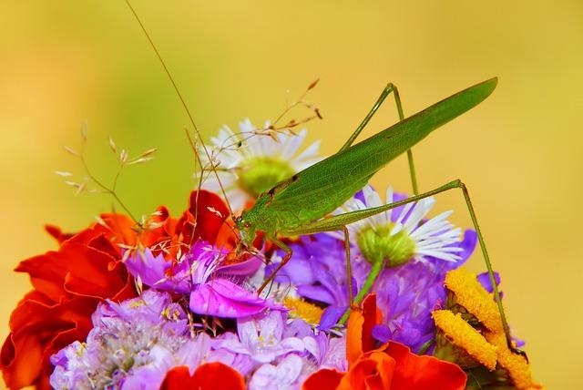 Długoskrzydlak Sierposz, Prostoskrzydłe, Insect