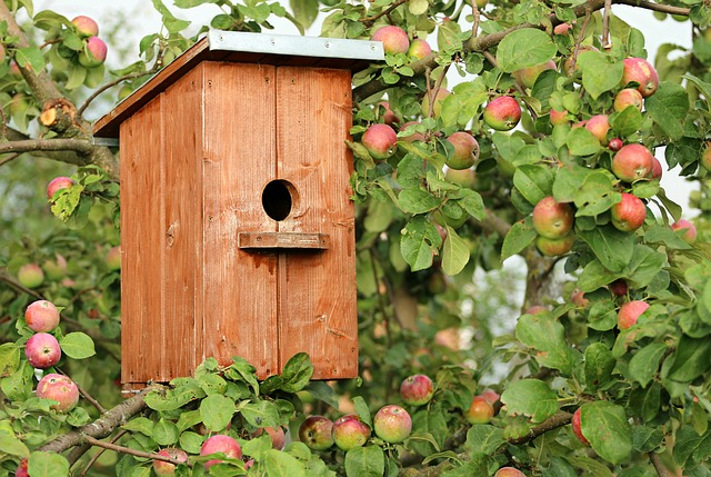 Birdhouse, Cottage, Apple Tree, Jack, Birds, Protection