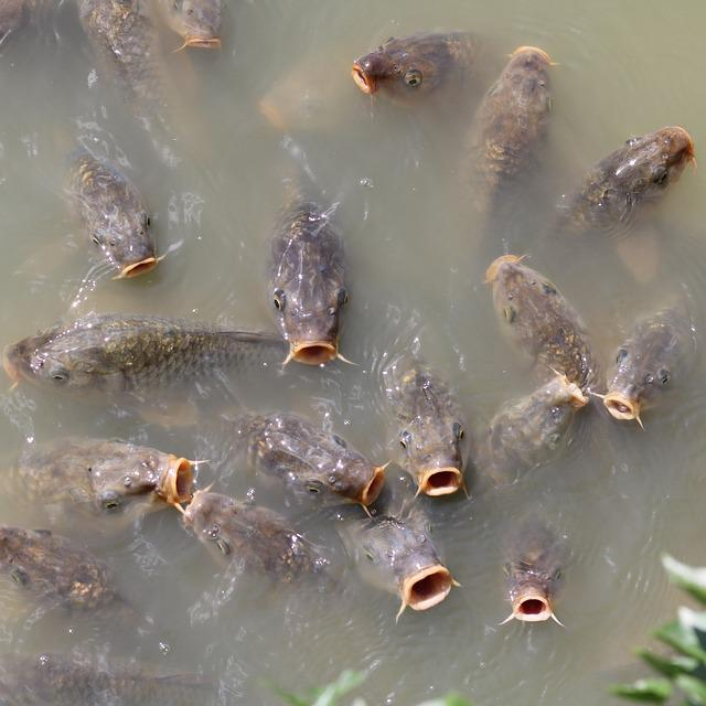 Waters, Nature, Puddle, River, Animal, Background, Fish