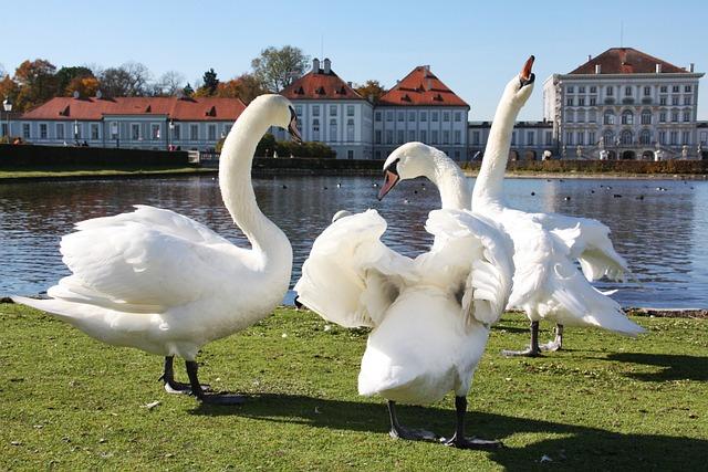 Swan, Waters, Lake, Bird, Puddle, Nature, Reflection