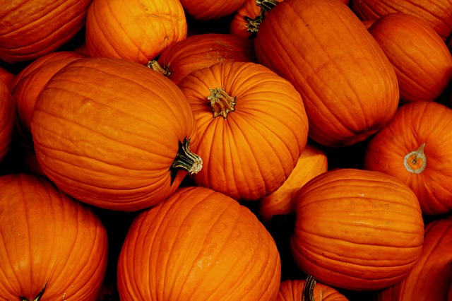 Pumpkin, Halloween, Autumn, Orange, October, Stem