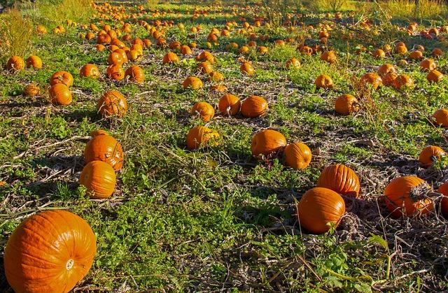 Pumpkin, Pumpkin Box, Orange, Vegetables, Autumn, Fruit
