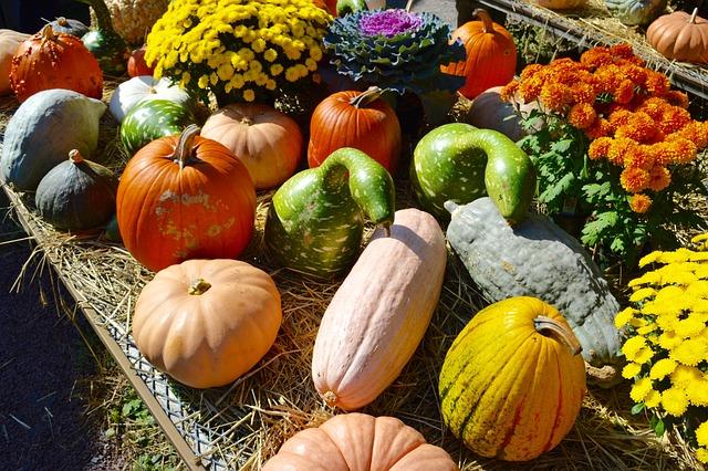 Fall, Outdoor Market, Pumpkin, Gourds, Blue Gourds