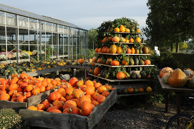 Pumpkin, Autumn, Sale, Harvest Festival, Halloween