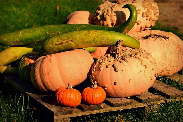 Pumpkin, Cucuzza Squash, Vegetable, Harvest, Food