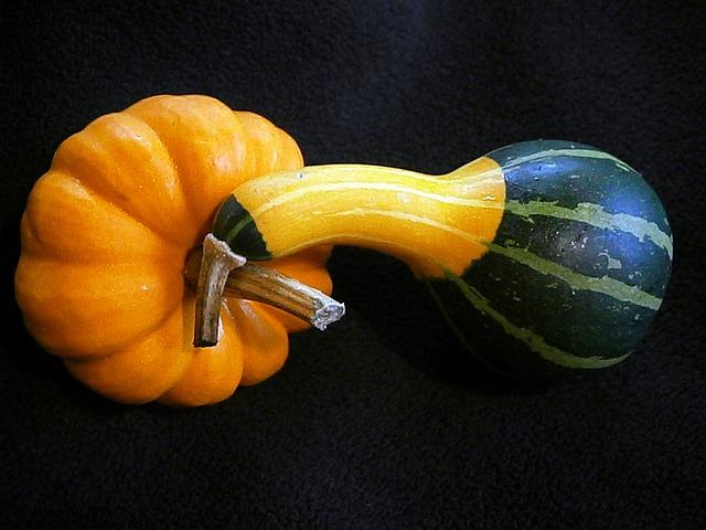 Pumpkin, Gourd, Mini Pumpkins, Miniature Pumpkin