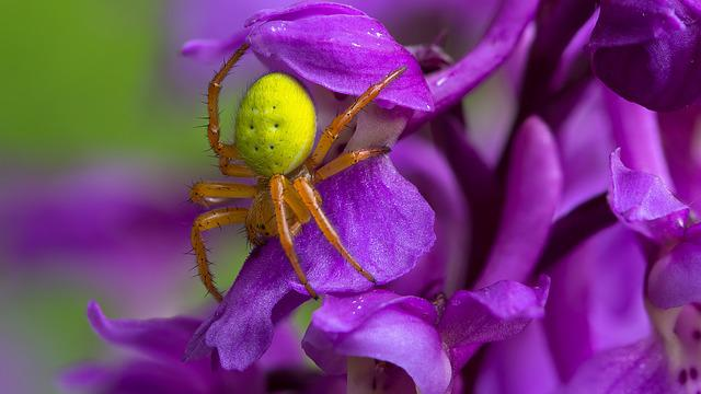 Pumpkin Spider, Spider, Insect, Macro, Arachnid