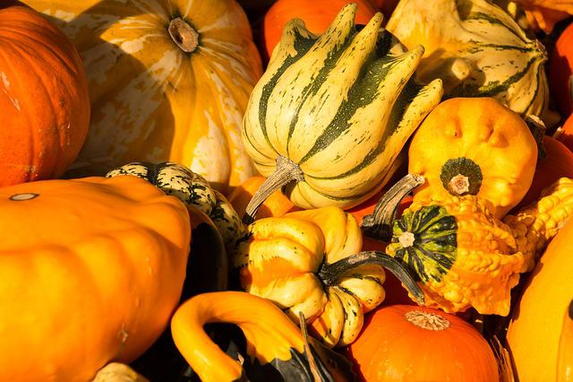 Pumpkin, Gourd, Autumn, Orange, Harvest, Thanksgiving