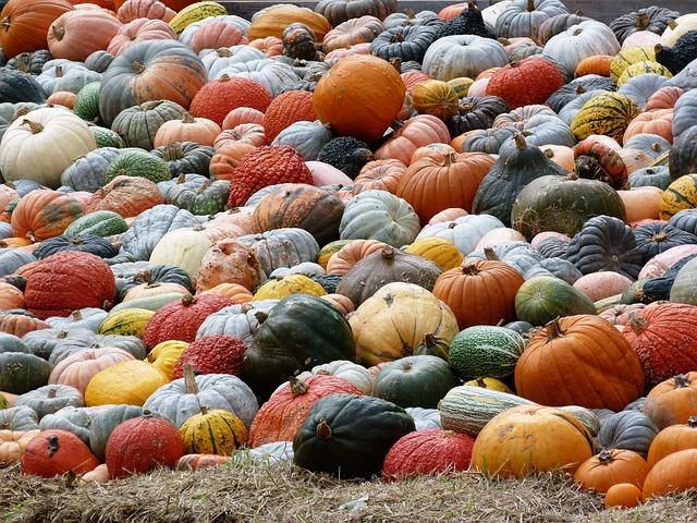 Pumpkin, Autumn, Autumn Colours, Colorful, Pumpkins
