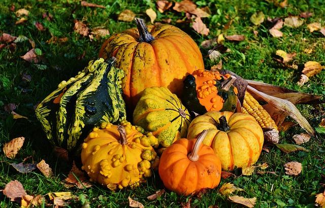Pumpkins, Decorative Squashes, Nature, Autumn