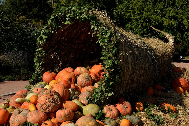 Pumpkins, Vegetables, Orange, Autumn, Cornucopia