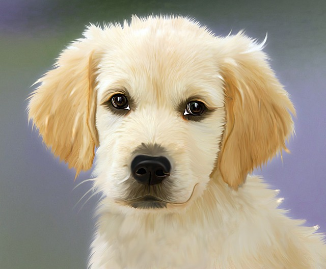 Painting, Dog, Golden Retriver, Face, Trusting, Puppies