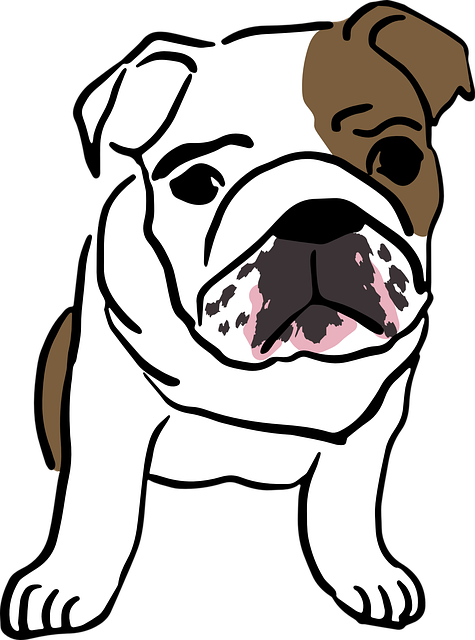 English, Bulldog, Baby, Mammal, Puppy, Cute, Dogs