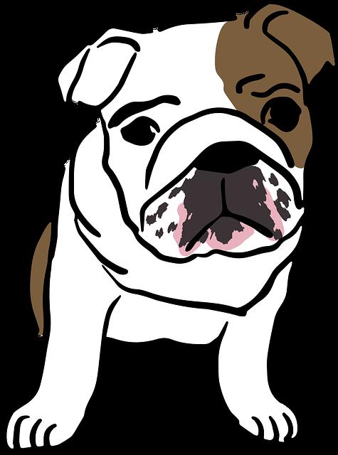 English, Bulldog, Baby, Mammal, Puppy, Cute, Dogs