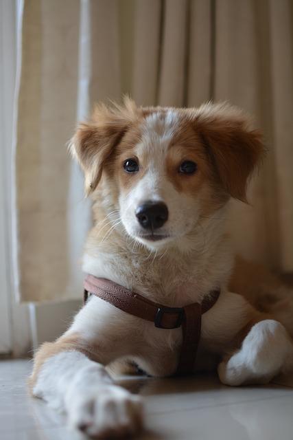 Dog, Pet, Cute, Canine, Animal, Puppy, Mammal, Adorable