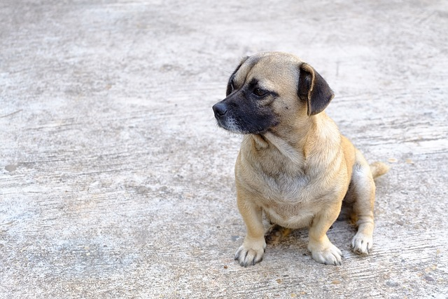 Dog, Animal, Pets, Puppy