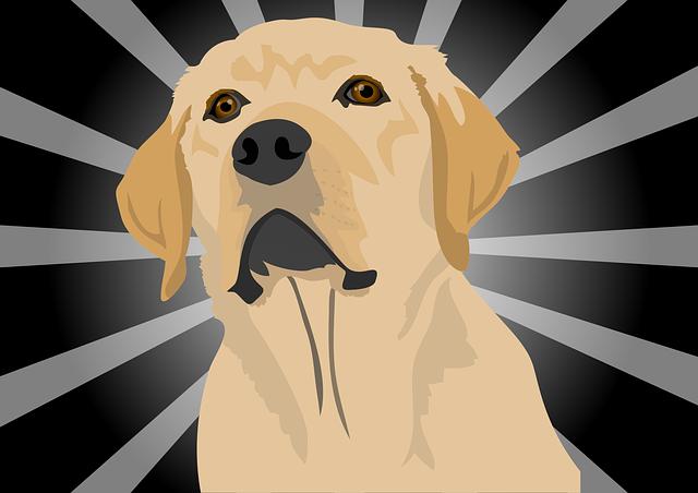 Dog, Labrador, Puppy, Hundeportrait, Purebred Dog