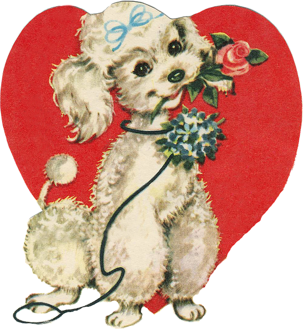 Love, Heart, Amorous, Dog, Puppy, Poodle, Rosa