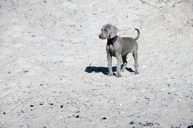 Dog, Animal, Friend, Pointer, Puppy, Toddler