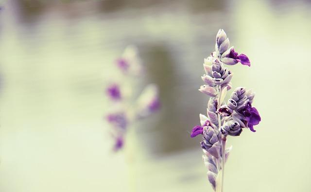 Flower, Purple, Riverside, Beautiful, Vintage, Art
