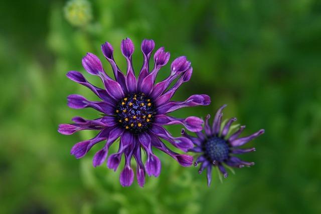 Purple, Flower, Wildfower, Nature, Floral