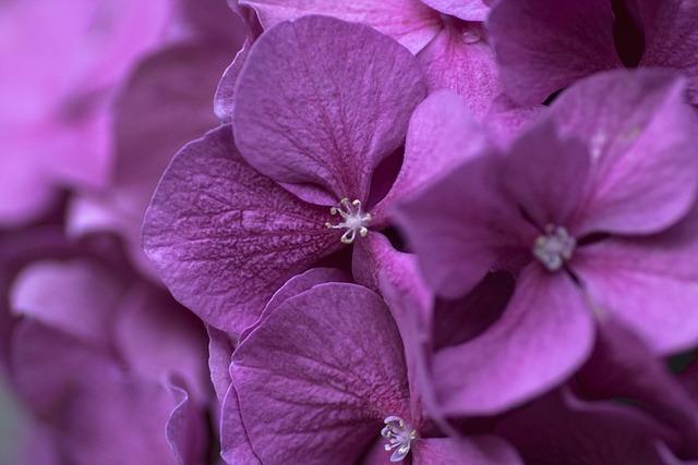 Flower, Blossom, Bloom, Purple Flower, Plant, Nature