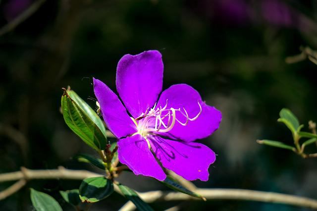 Te Male Flowers, Nature, Purple, Plant, Flower, Leaf