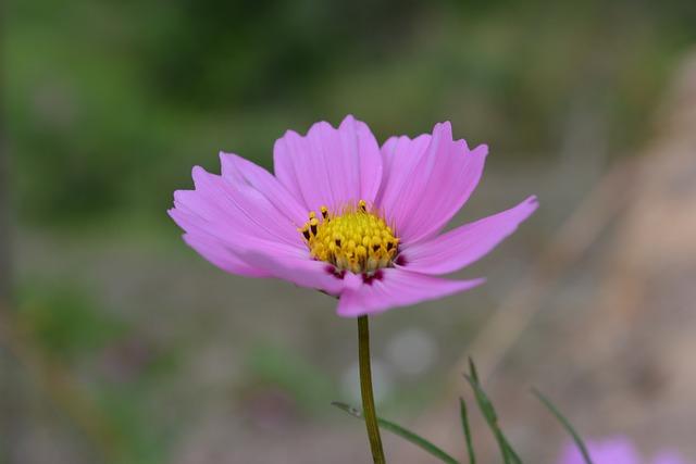 Flower, Thailand, Tusks, Nature, Summer, Purple