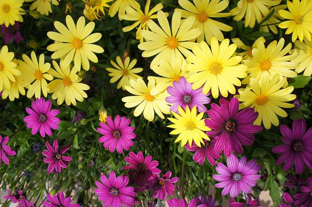 Flower Garden, Flowers, Purple Flowers, Flower, Yellow