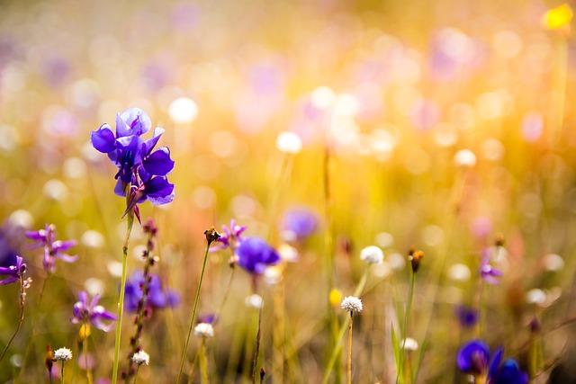 Flowers, Wildflowers, Orchids, Plant, Purple Flowers