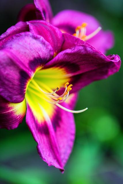 Flower, Nature, Orchid, Garden, Pink, Spring, Purple