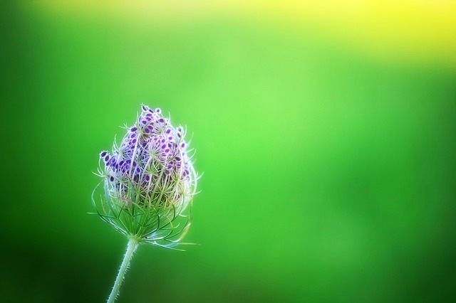 Green, Bokeh, Flower, Lilac, Purple, Nature, Meadow
