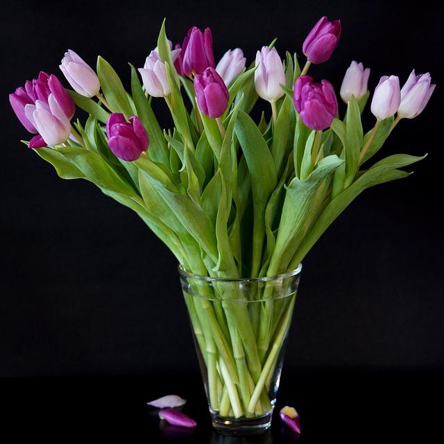 Still Life, Tulips, Bouquet, Purple, Lilac