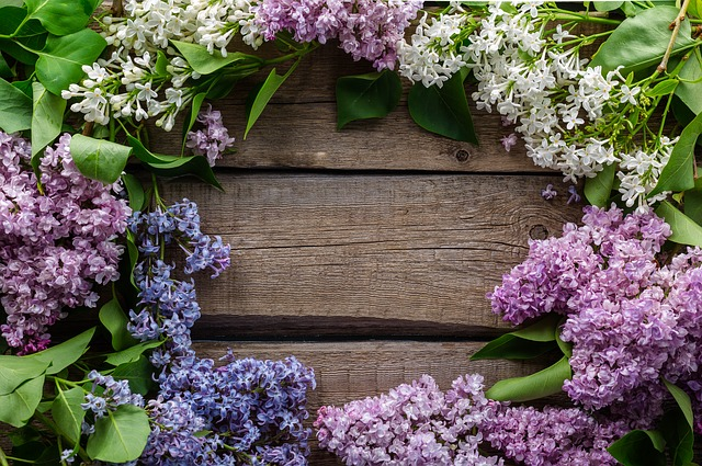 Flowers, Postcard, Purple, Spring
