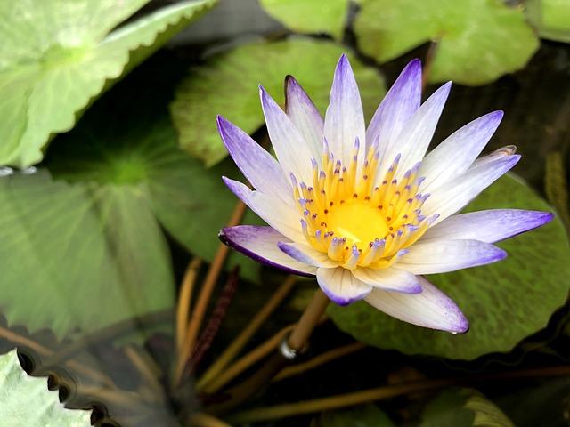 Plant, Nature, Foliage, Flower, Pots, Purple White
