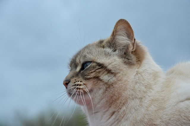 Cat, Pussy, Portrait Of Profile, Profile Of Cat
