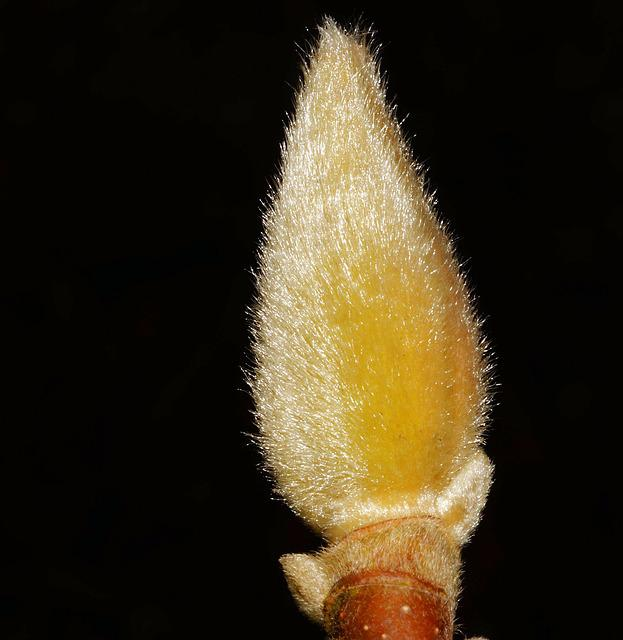 Pasture, Pussy Willow, Blossom, Bloom, Inflorescence