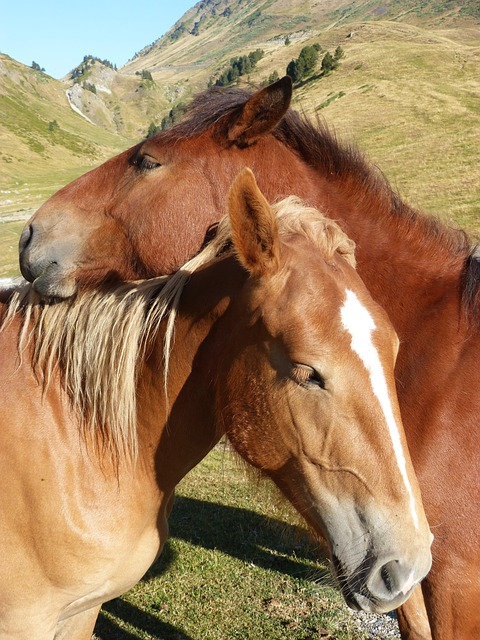 Horses, Couple, Val D'aran, Pyrenees, Tenderness