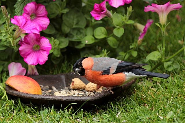 Animal, Bird, Bullfinch, Gimpel, Male, Pyrrhula, Garden