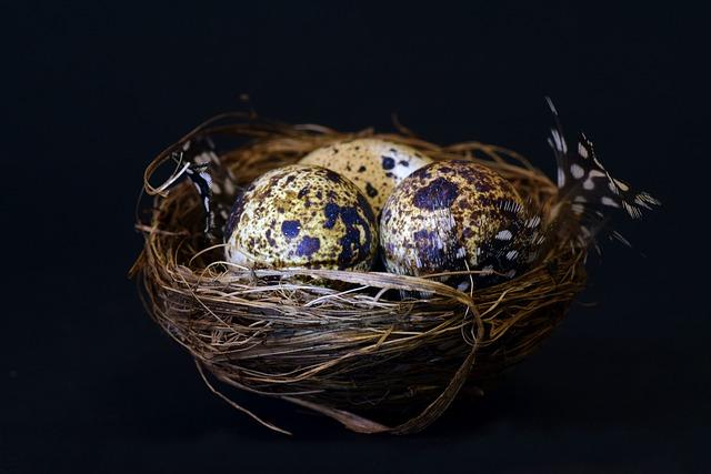 Nest, Bird's Nest, Quail Egg, Speckled, Feather, Easter