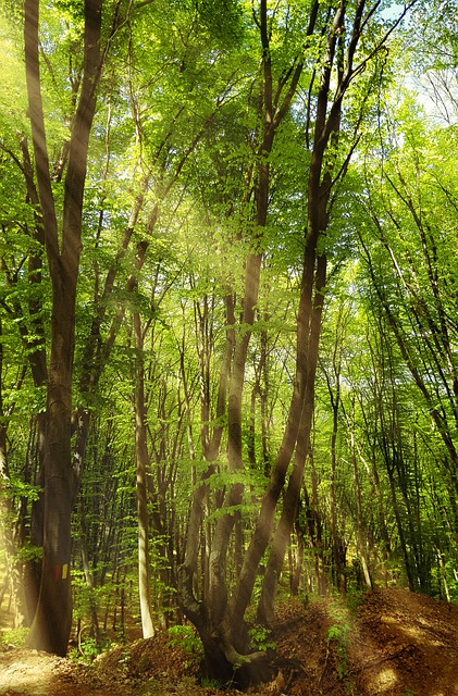 Country Side, Forest, Nature Landscape, Quiet Place