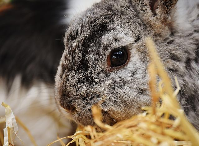Rabbit, Bunny, Hare, Animal, Fur, Easter, Cute, Face